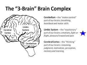 3-Brain.BreakingTheCycles.com