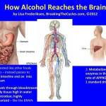 How the body processes alcohol - understand it and avoid causing or being the victim of secondhand drinking.