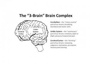 "Image 1 - The ""3-Brain"" Brain Complex. Photo courtesy: Jessica Scott"