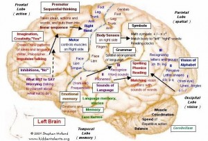 Left side of brain - activity in a specific area is governed by neural networks in that area. Source: HiddenTalents.org, http://hiddentalents.org/brain/113-maps.html