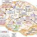 Understand Brain Maps | Change a Habit | Change Your Life