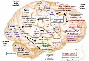 Right side of brain - activity in a specific area is governed by neural networks in that area. Source: HiddenTalents.org, http://hiddentalents.org/brain/113-maps.html
